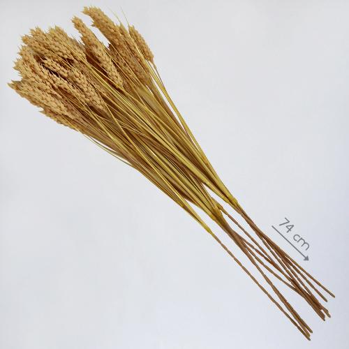 """Муляж """"Колосья пшеницы"""""""